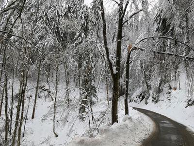 Kronenbruch im Nadelholz. Foto: LRA