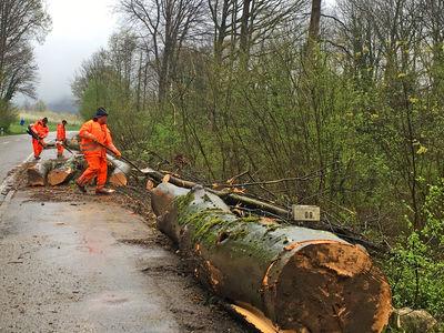 Verkehrssicherung Illenauer Wald